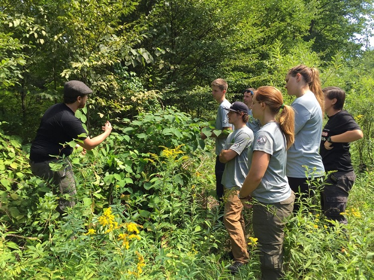 How to Deal with Japanese Knotweed